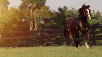 Lane's End TV Spot, 'Union Rags: A Stallion That Stands Above the Rest' - Thumbnail 5