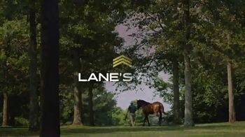 Lane's End TV Spot, 'Quality Road: Leader of His Generation' - Thumbnail 10
