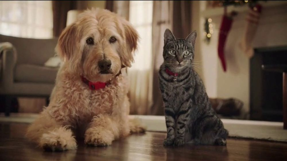 Petco Christmas Commercial 2020 PetSmart TV Commercial, 'Cats and Dogs'   iSpot.tv
