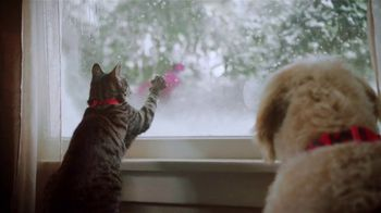 PetSmart TV Spot, 'Cats and Dogs' - Thumbnail 8