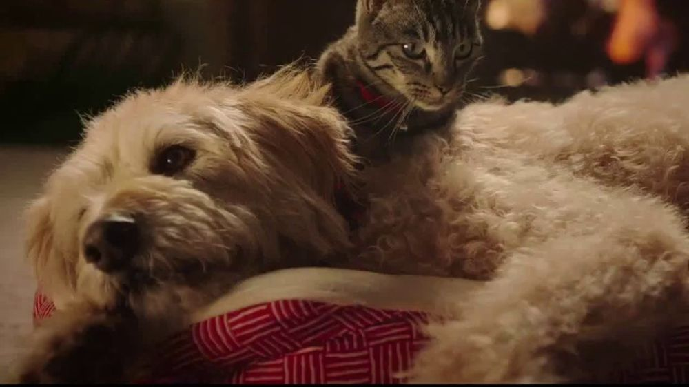 Petco Christmas Commercial 2020 PetSmart TV Commercial, 'With You Through the Holidays'   iSpot.tv