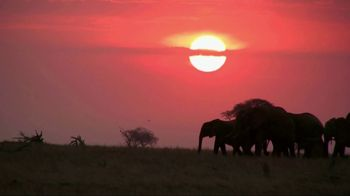 World Wildlife Fund TV Spot, 'Stop Wildlife Crime'