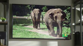 GEICO TV Spot, 'Cats Like Watching Animal Planet' - Thumbnail 2