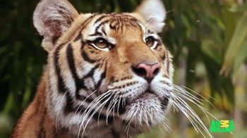 GEICO TV Spot, 'Cats Like Watching Animal Planet' - Thumbnail 4