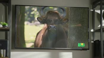 GEICO TV Spot, 'Cats Like Watching Animal Planet' - Thumbnail 7
