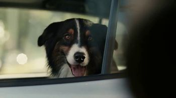 Subaru A Lot to Love Event TV Spot, 'More Than a Car' [T2] - Thumbnail 8