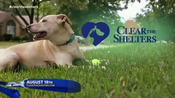 Clear the Shelters TV Spot, 'It's Back'