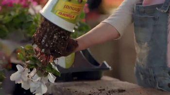 The Home Depot TV Spot, 'Dipladenias' [Spanish]