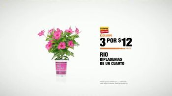 The Home Depot TV Spot, 'Dipladenias' [Spanish] - Thumbnail 8