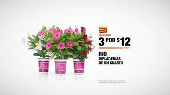 The Home Depot TV Spot, 'Dipladenias' [Spanish] - Thumbnail 9
