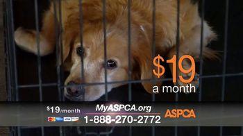 ASPCA Spring Member Drive TV Spot, 'Dog Fighting Cruelty' - Thumbnail 5