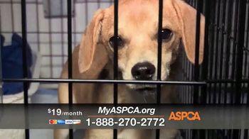 ASPCA Spring Member Drive TV Spot, 'Dog Fighting Cruelty' - Thumbnail 6