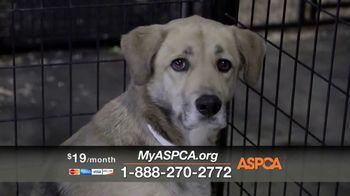 ASPCA Spring Member Drive TV Spot, 'Dog Fighting Cruelty' - Thumbnail 8