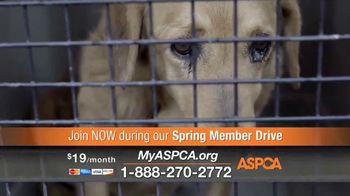ASPCA Spring Member Drive TV Spot, 'Dog Fighting Cruelty' - Thumbnail 9
