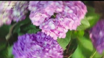 Endless Summer BloomStruck Hydrangeas TV Spot, 'Life in Full Bloom' - Thumbnail 1