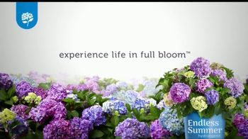Endless Summer BloomStruck Hydrangeas TV Spot, 'Life in Full Bloom' - Thumbnail 9