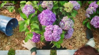 Endless Summer BloomStruck Hydrangeas TV Spot, 'Life in Full Bloom' - Thumbnail 2