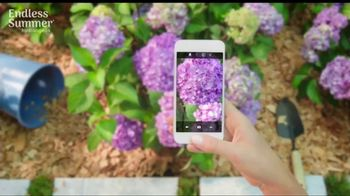 Endless Summer BloomStruck Hydrangeas TV Spot, 'Life in Full Bloom' - Thumbnail 3