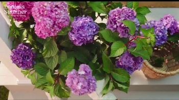 Endless Summer BloomStruck Hydrangeas TV Spot, 'Life in Full Bloom' - Thumbnail 4