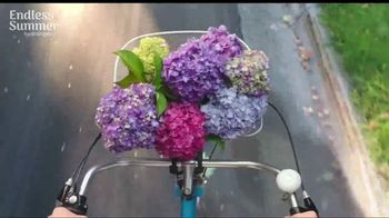 Endless Summer BloomStruck Hydrangeas TV Spot, 'Life in Full Bloom' - Thumbnail 5