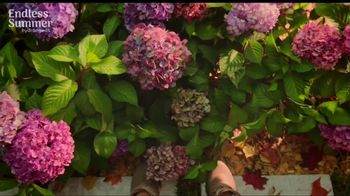 Endless Summer BloomStruck Hydrangeas TV Spot, 'Life in Full Bloom' - Thumbnail 8