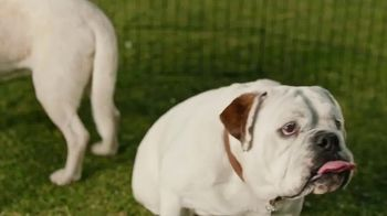 Coldwell Banker TV Spot, 'Old Dog, New Dog' - Thumbnail 7