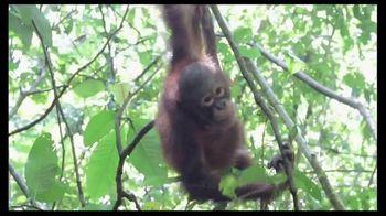 International Animal Rescue TV Spot, 'Act Now: Save the Orangutan' - Thumbnail 1