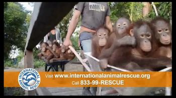 International Animal Rescue TV Spot, 'Act Now: Save the Orangutan' - Thumbnail 10
