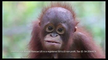International Animal Rescue TV Spot, 'Act Now: Save the Orangutan' - Thumbnail 2