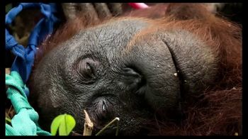 International Animal Rescue TV Spot, 'Act Now: Save the Orangutan' - Thumbnail 4