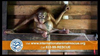 International Animal Rescue TV Spot, 'Act Now: Save the Orangutan' - Thumbnail 5