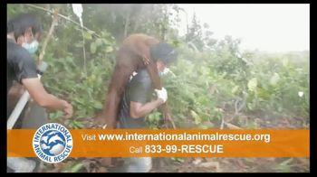 International Animal Rescue TV Spot, 'Act Now: Save the Orangutan' - Thumbnail 6