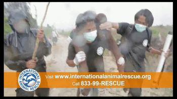 International Animal Rescue TV Spot, 'Act Now: Save the Orangutan' - Thumbnail 7