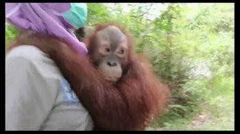 International Animal Rescue TV Spot, 'Act Now: Save the Orangutan' - Thumbnail 8