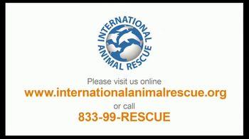 International Animal Rescue TV Spot, 'Act Now: Save the Orangutan' - Thumbnail 9