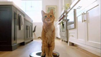 Cat Toy thumbnail