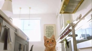 Fresh Step Clean Paws TV Spot, 'Cat Toy' - Thumbnail 3