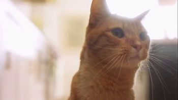 Fresh Step Clean Paws TV Spot, 'Cat Toy' - Thumbnail 7