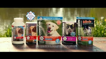 Cosequin TV Spot, 'Joint Health Support for Veteran Service Dog' - Thumbnail 6