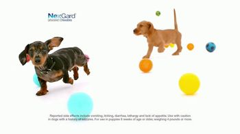 NexGard Chewables for Dogs TV Spot, 'Puppy Happiness' - Thumbnail 8