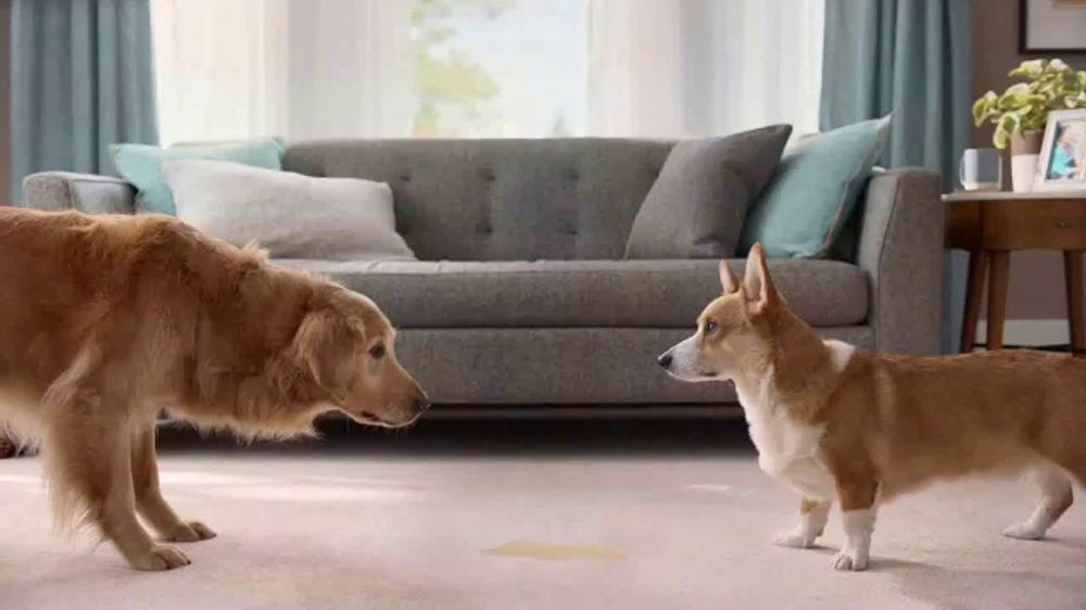 Resolve Pet Expert Tv Commercial Max And Cooper Ispot Tv