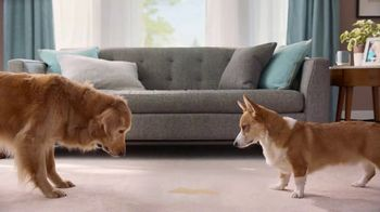 Resolve Pet Expert TV Spot, 'Max and Cooper' - Thumbnail 4