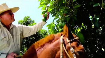 Avocados From Peru TV Spot, 'International Culinary Artistry' - Thumbnail 9