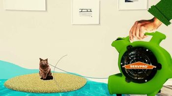 SERVPRO TV Spot, 'Animal Planet: Sometimes Life Throws You a Curve' - Thumbnail 8