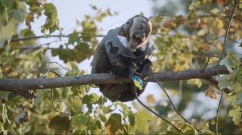 Juicy Drop Pop TV Spot, 'Monkey' - 3205 commercial airings