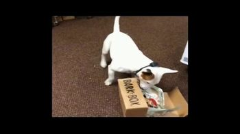 BarkBox TV Spot, 'New Toy: Free Shipping' - Thumbnail 2
