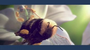 IBM Cloud TV Spot, 'Bees'