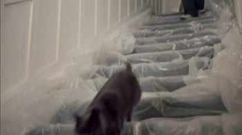 Sheba Perfect Portions TV Spot, 'Painting' Song by REO Speedwagon - Thumbnail 5