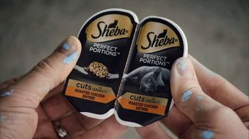 Sheba Perfect Portions TV Spot, 'Painting' Song by REO Speedwagon - Thumbnail 6