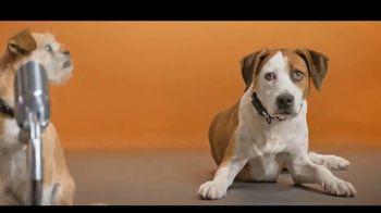 Best Friends Animal Society TV Spot, 'Dear, Humans' - Thumbnail 4